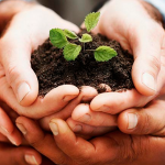 Sites sustentáveis: saiba como transformar o seu