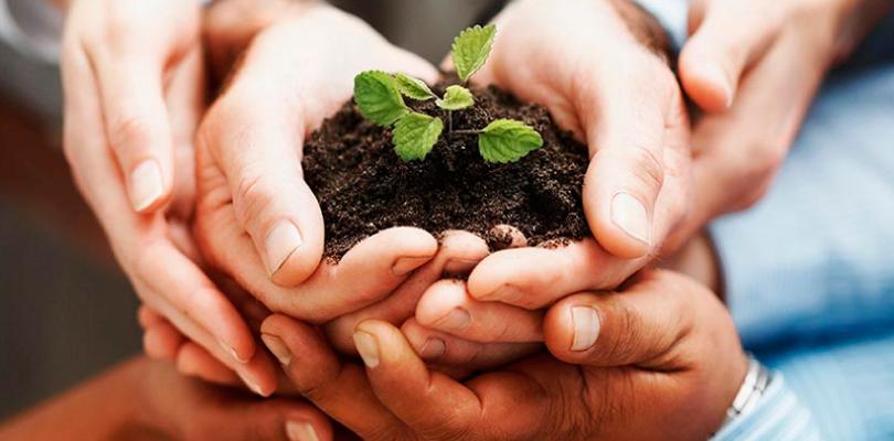 Sites sustentáveis: saiba como transformar o seu em um